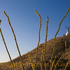 Title:  Ocotillo, Teepee, and Blue Sky<br /> <br /> Comments: Don't ask me why. <br /> <br /> Location: Terlingua
