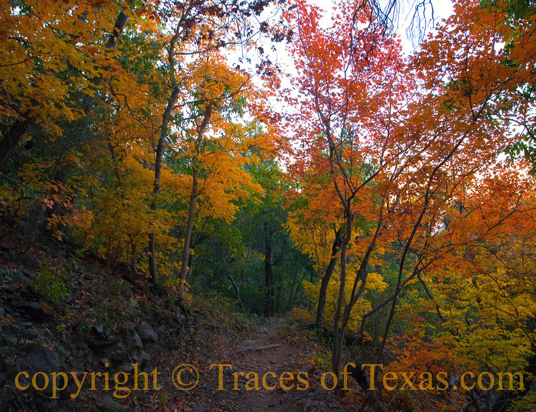 Title:   Texas Myth # 517: We have no Fall Color<br /> <br /> Comments:  Northerners think that Texas has no fall color, but you just have to know where to look. <br /> <br /> Location: Along the Boot Canyon trail.