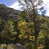 Title:   Apex<br /> <br /> Comments: McKittrick Canyon in the Fall<br /> <br /> Location: Guadalupe Mountains National Park