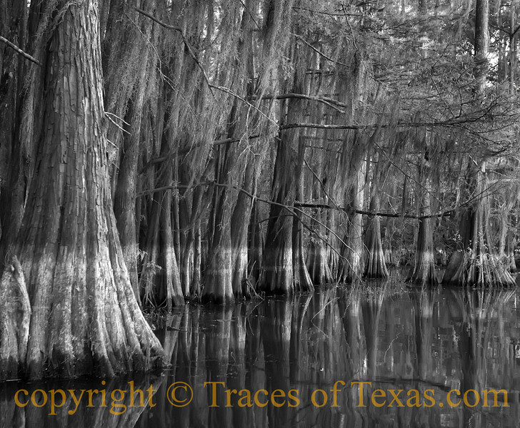 <br>Title: Where I Saw a <b>HUGE</b> Alligator.  No Kidding.  Comments. He must have been 12 or 13 feet long. I was paddling along silently when, suddenly, I had that creepy sensation that I was being watched. I backed my kayak up and turned it around, only to see the alligator slip silently below the surface about 10 feet away.   Location: East Texas