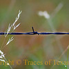 Title:  Weeds and Wire <br /> <br /> Comments: <br /> <br /> Location: Lexington