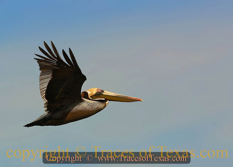 Title:   On the Possibility of Pelicans<br /> <br /> Comments: <br /> <br /> Location: Rio Hondo