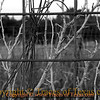 Title:   Hog Panel Heaven<br /> <br /> Comments: A hog panel fence at an abandoned ranch.<br /> <br /> Location: Dimmit, Texas