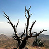 Title: Tree at the Edge of the World  <br /> <br /> Comments: <br /> <br /> Location: Big Bend