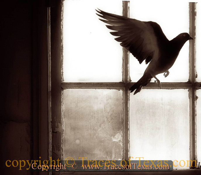 Title:   I Want to Fly Like a .... Pigeon<br /> <br /> Comments:  Getting kind of sepia in the old Hawn Hotel in Temple. Built in 1928, it was once a showplace. Now it is an elaborate pigeon roost.  <br /> <br /> Location: Temple, Texas