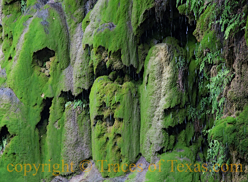<br><br> The ferns and lichen at Gorman Falls are electric neon-green in color. <br><br> Colorado Bend State Park