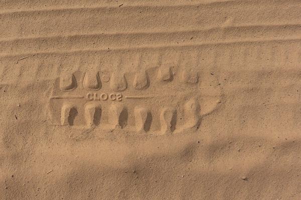 Croc Track. Grand Staircase National Monument, Kane County, Utah USA