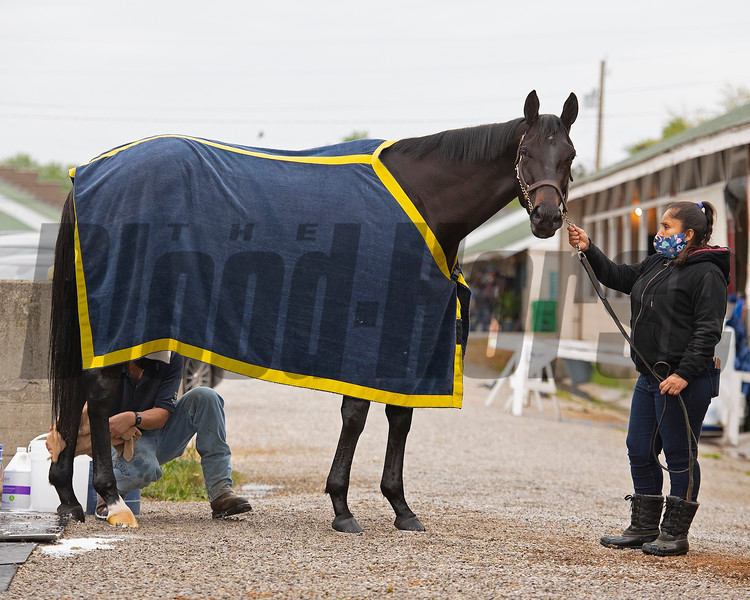Medina Spirit<br /> Kentucky Derby and Oaks horses, people and scenes at Churchill Downs in Louisville, Ky., on April 24, 2021.