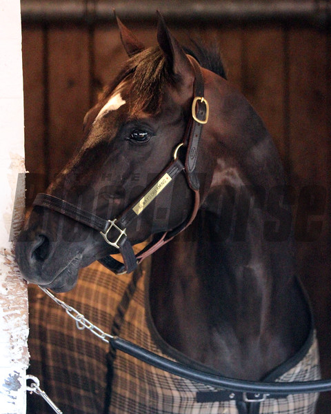 Always Dreaming Kentucky Derby Chad B. Harmon