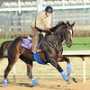 Zenyatta, Churchill Downs, Louisville, KY, 11.4.10, Mathea Kelley;