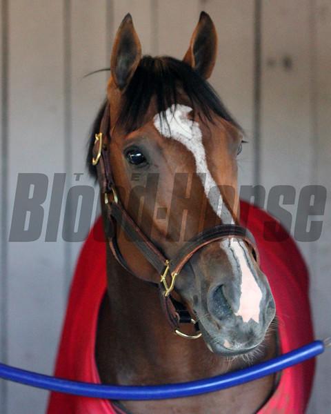 Gormley Kentucky Derby Chad B. Harmon