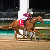 Caption:<br /> Gun Runner with Florent Geroux wins Clark Handicap (gr. I) on Nov. 25, 2016, at Churchill Downs.