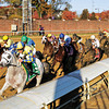 Hansen (yellow and blue cap), with Ramon Dominguez up, won the Grey Goose Breeders's Cup Juvenile (G. I) at Churchill Downs on November 5, 2011. Photo by Crawford Ifland.