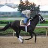 Just Whistle Dixie at Churchill Downs in Louisville, Kentucky April 30, 2009