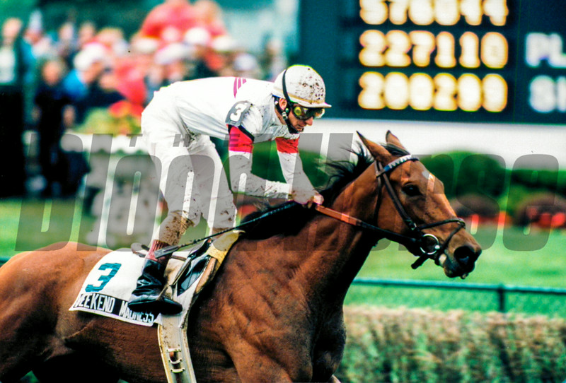 Batch 15- HORSES
