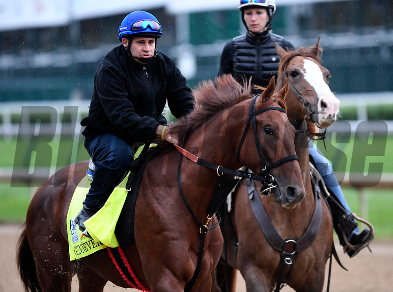 Gunnevera out for exercise Wednesday morning May 4, 2017 in preparation for Saturday's 143rd running of the Kentucky Derby at Churchill Downs in Louisville, Kentucky.  Photo by Skip Dickstein