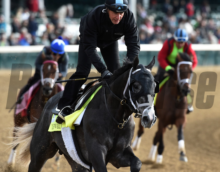 Tap writ gallops at Churchill Downs May 3, 2017 in Louisville, KY.  Photo by Skip Dickste