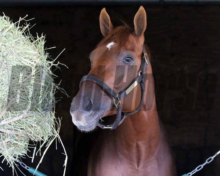 Hidden Stash arrived at Churchill Downs on April 27, 2021. Photo By: Chad B. Harmon