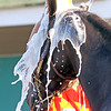Rock Your World getting a bath at Churchill Downs on April 27, 2021. Photo By: Chad B. Harmon