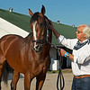 Bob Baffert with Authentic outside barn.<br /> The morning after Authentic wins the Kentucky Derby (G1) at Churchill Downs, Louisville, KY on September 5, 2020.