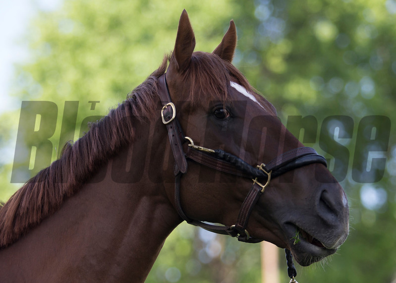 Irish War Cry in the morning of Wednesday, May 3rd, 2017 at Churchill Downs.