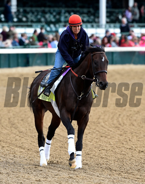 J Boys Echo gallops at Churchill Downs May 3, 2017 in Louisville, KY.  Photo by Skip Dickste