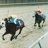 Is It True won 1988 Breeders' Cup Juvenile.<br /> Anne M. Eberhardt
