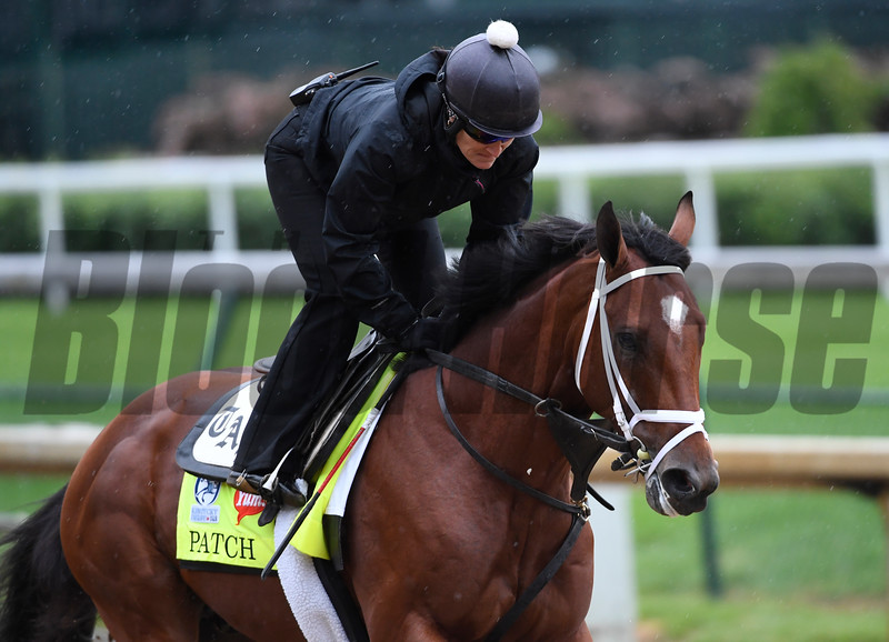 Patch out for exercise Wednesday morning May 4, 2017 in preparation for Saturday's 143rd running of the Kentucky Derby at Churchill Downs in Louisville, Kentucky.  Photo by Skip Dickstein