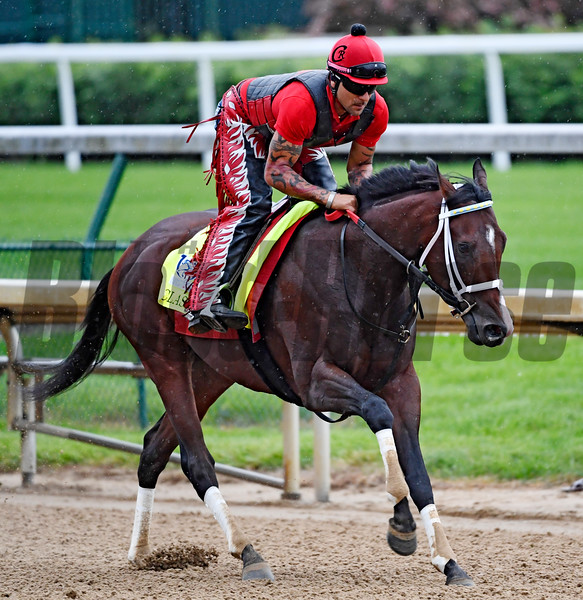 Classic Empire out for exercise Wednesday morning May 4, 2017 in preparation for Saturday's 143rd running of the Kentucky Derby at Churchill Downs in Louisville, Kentucky.  Photo by Skip Dickstein