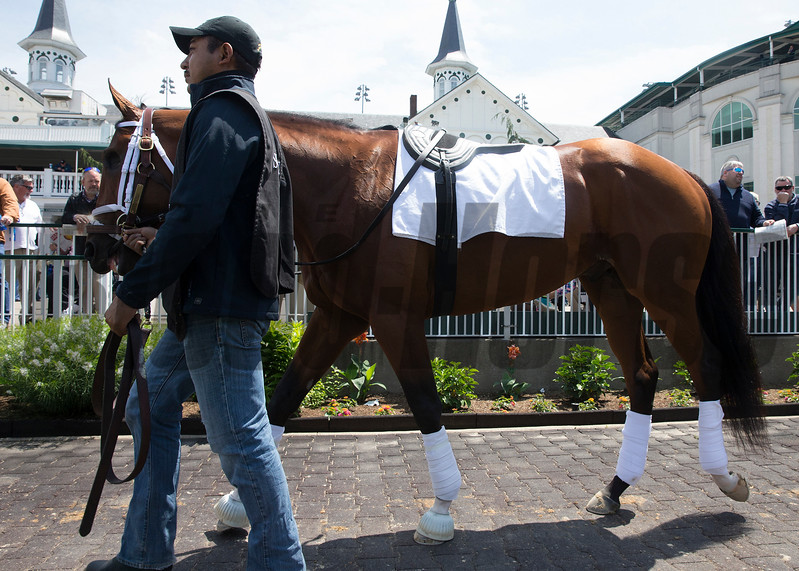 Patch schooling onWednesday, May 3rd, 2017 at Churchill Downs.