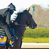 Authentic<br /> Breeders' Cup horses at Keeneland in Lexington, Ky. on November 4, 2020.