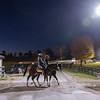 Harvest Moon walks across the road leading to the Rice Road barns at Keeneland Race Course Wednesday Nov. 4 2020 in Lexington, KY.  Photo by Skip Dickstein
