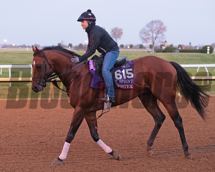 Leinster<br /> Breeders' Cup horses at Keeneland in Lexington, Ky. on November 5, 2020.