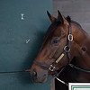 Life Is Good returns to training after minor surgery  on May 25, 2021.
