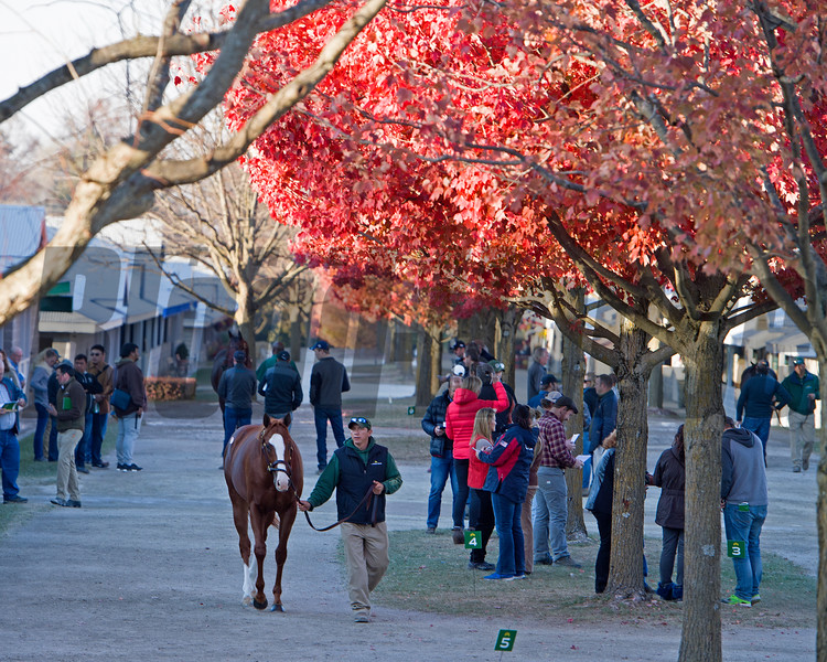 Hip 2865 Conquest Crown Me<br /> Conquest Stables show at Lane's End consignment, with Allaire Ryan (with Lane's End). <br /> Keeneland November Sales on Nov. 13, 2016, in Lexington, Ky.