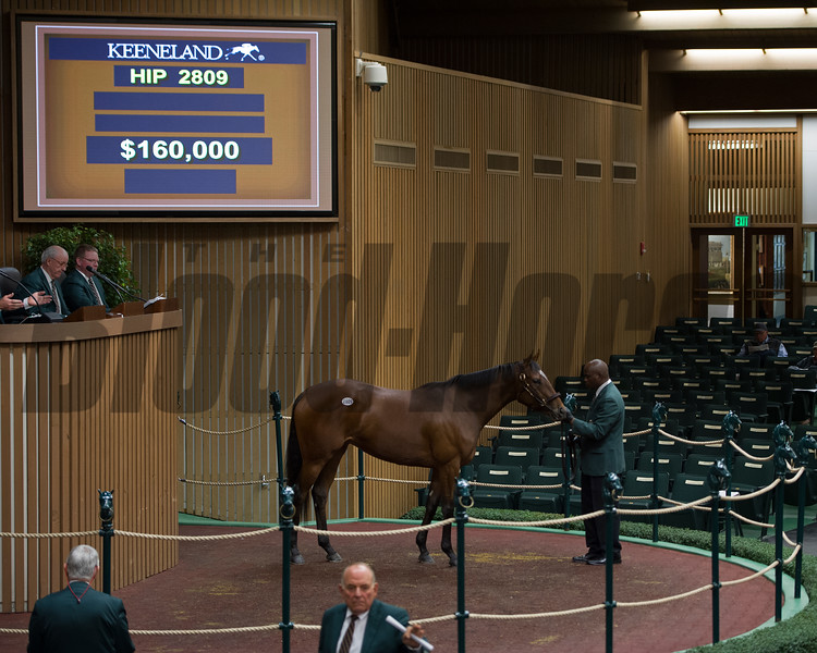 Hip 2809 brings $160,000. If You Say So from Elm Tree Farm.<br /> Keeneland November Sales on Nov. 15, 2016, in Lexington, Ky.