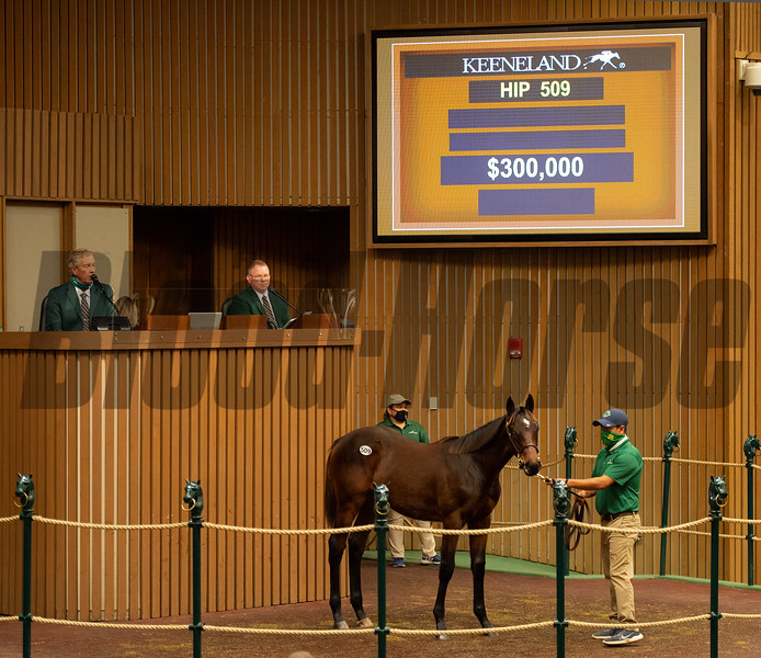 Hip 509 colt by Constitution out of Welcome Speech  from Lane's End<br /> Sales horses at the Keeneland November Sale at Keeneland in Lexington, Ky. on November 10, 2020.
