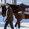 Breeders' Cup entrant Jesus' Team walks in the barn this morning at Keeneland Race Course Tuesday Nov. 3 2020 in Lexington, KY.  Photo by Skip Dickstein