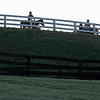 Caption: horses walking to the track<br /> Behind the Scenes at Keeneland during Covid19 virus and the people, horses, and essentials needed to take care of race horses on April 2, 2020 Keeneland in Lexington, KY.