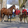 Hip 539 Moonshine Bertie with Speightster foal from Brandywine Farm at Keeneland January sales.