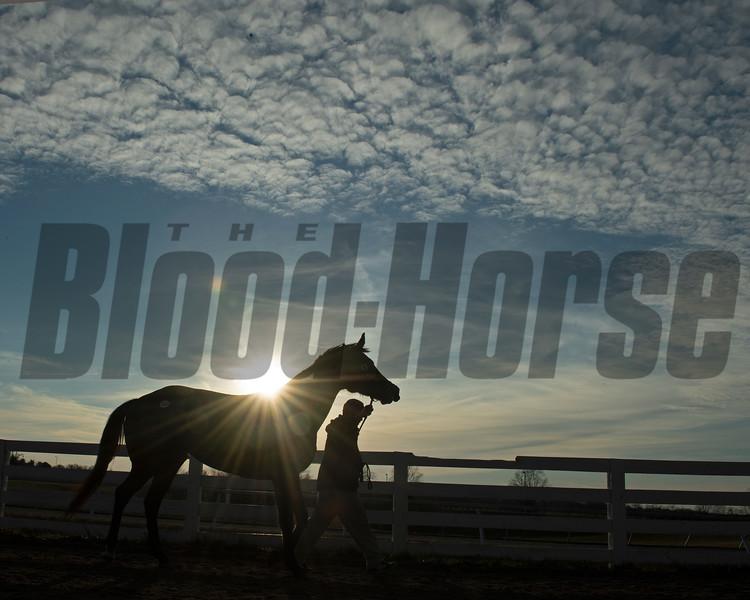 horse walking back to barn.<br /> Keeneland January Sales at Keeneland near Lexington, Ky., on Jan. 14, 2021.