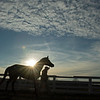 horse walking back to barn.<br /> Keeneland January Sales at Keeneland near Lexington, Ky., on Jan. 14, 2021.