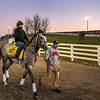 Tacitus is walked to the track for morning exercise at Keeneland Race Course Wednesday Nov. 4 2020 in Lexington, KY.  Photo by Skip Dickstein