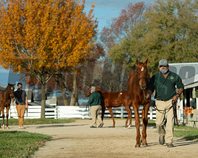Hip 940 filly by Gun Runner out of Capital Plan from Hunter Valle Farm, agent<br /> Sales horses at the Keeneland November Sale at Keeneland in Lexington, Ky. on November 10, 2020.