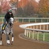 Tacitus<br /> Breeders' Cup horses at Keeneland in Lexington, Ky. on November 5, 2020.