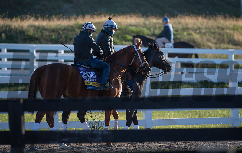 Filly Monomoy Girl heads to the track at Keeneland Race Course Monday Nov. 2 2020 in Lexington, KY.  Photo by Skip Dickstein