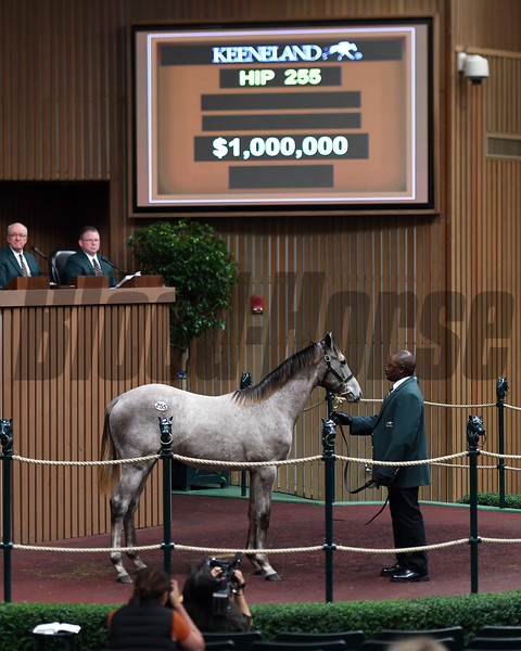 Hip 255 weanling filly by Tapit from Miss Empire and Eaton Sales hammered at $1M but ended up selling for 975,000. <br /> Keeneland November Sales on Nov. 9, 2016, in Lexington, Ky.