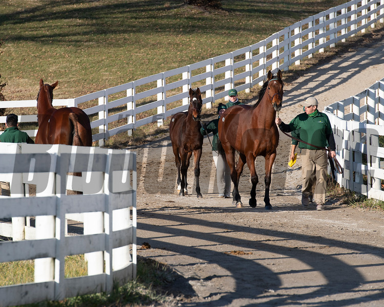 scene<br /> Keeneland January Sales at Keeneland near Lexington, Ky., on Jan. 14, 2021.