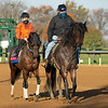 Echo Town<br /> Breeders' Cup horses at Keeneland in Lexington, Ky. on November 5, 2020.