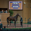 Hip 2927 from WinStar Racing brings $210,000<br /> Keeneland November Sales on Nov. 15, 2016, in Lexington, Ky.